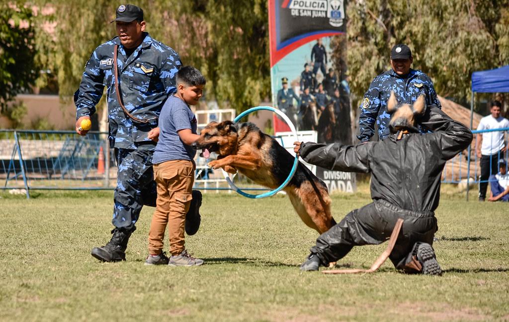 2019-11-01 GOBIERNO Demostración de canes y montada de la policía
