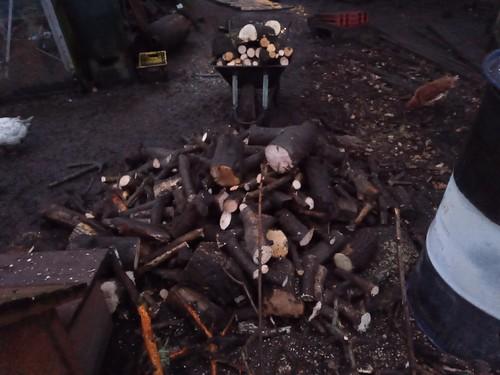Firewood Nov 19 (1)