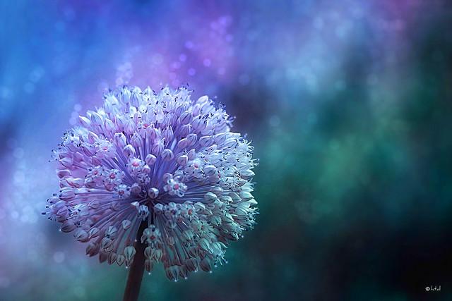 Flower for Shabat