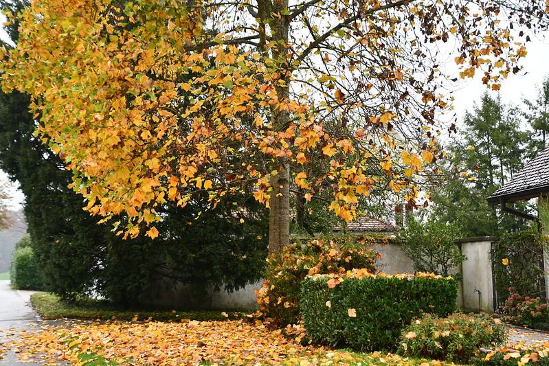 Autumn 01.11 (29)