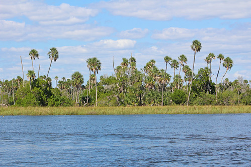 trees water river landscape scenery florida palmtrees hammock crystalriver