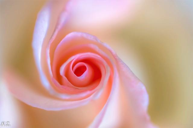 Rose Turn