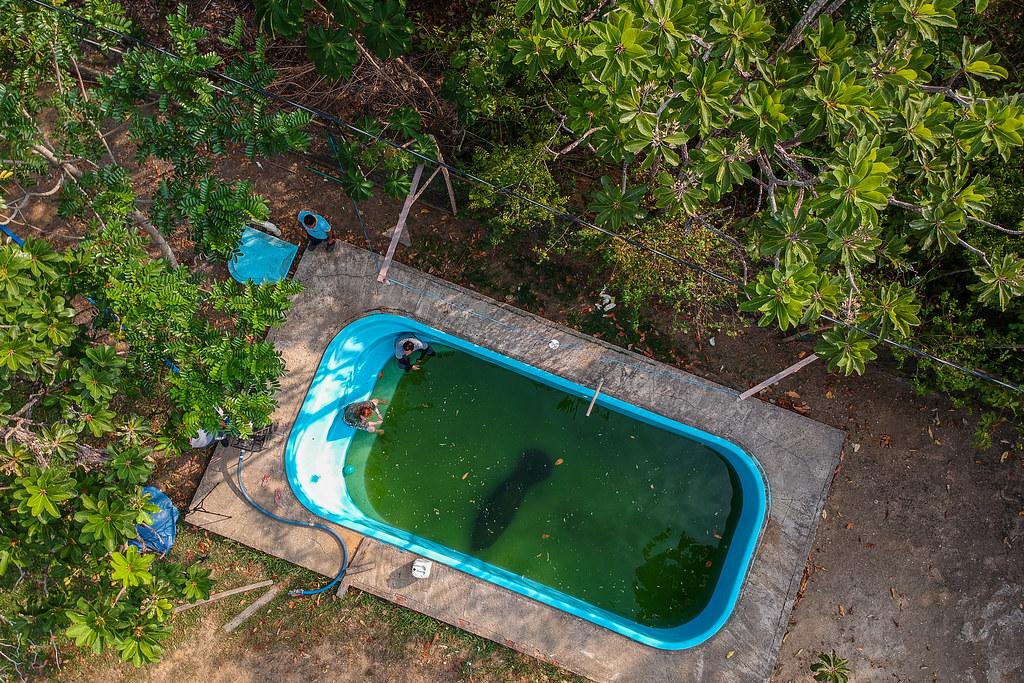 Soltura de peixe-boi, Amapá