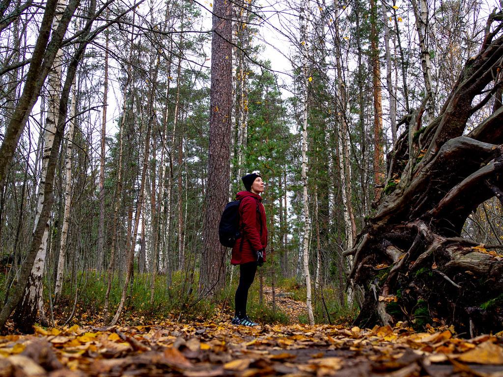 Sipoonkorven-kansallispuisto-Kalkinpolttajanpolku-12