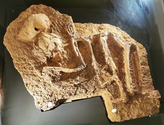 enterramiento en posicion fetal s. VI-III a.C. yacimiento de Arroyo Saladillo Museo de la Ciudad de Antequera Malaga
