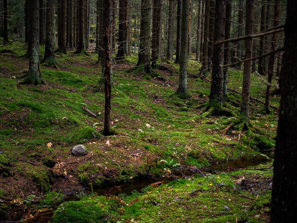 Sipoonkorven-kansallispuisto-Kalkinpolttajanpolku-2