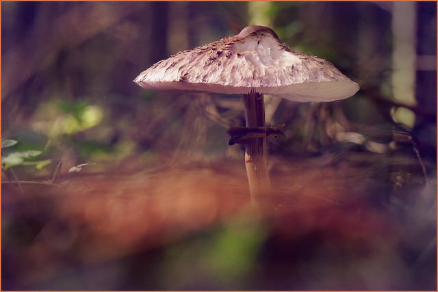 Under the parasol. Maybe the dancing of the fairies.