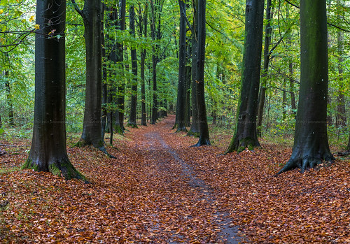 autumn background brown colorful environment fall foliage forest green landscape leaf leaves natural nature outdoor park path road scenic season sun sunlight tree trees wood woods yellow havré belgium bois d´havre