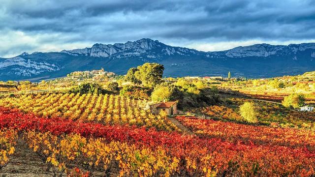 Rioja Alavesa.  El otoño.