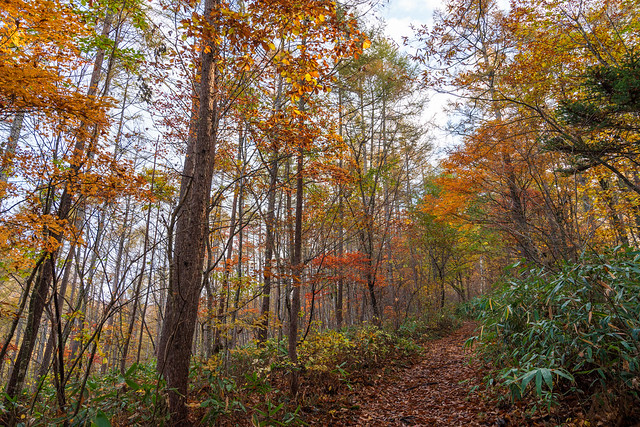 落葉の登山道
