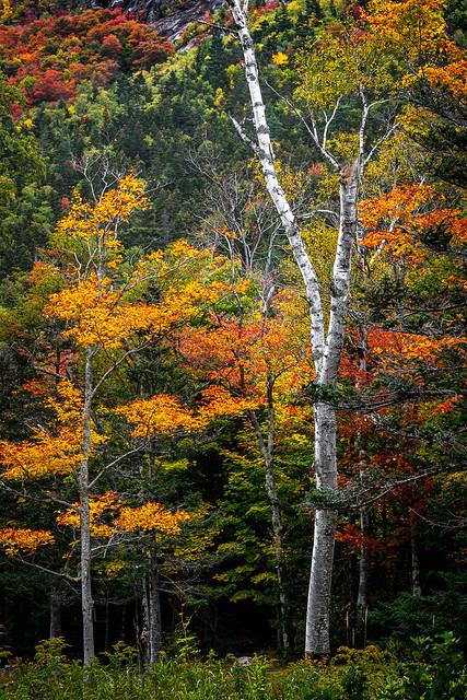 Appalachin Trail detour