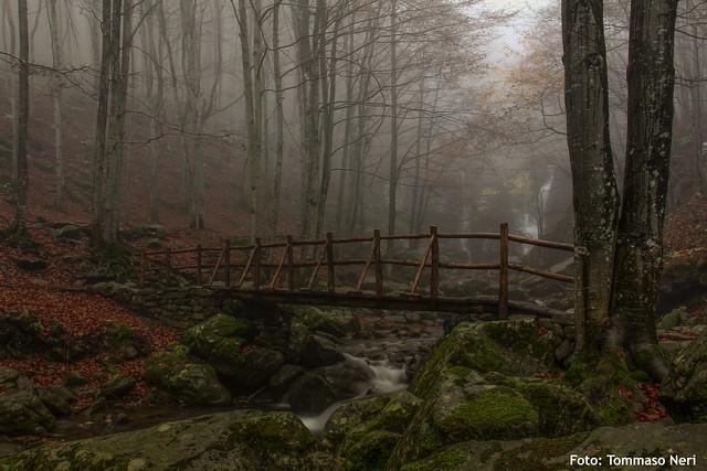Autunno sul torrente Dardagna, parco del Corno alle Scale
