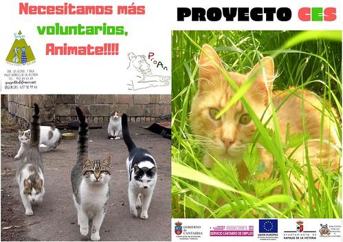 ProyCES1