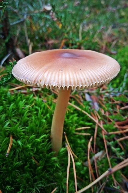 small forest umbrella ;)
