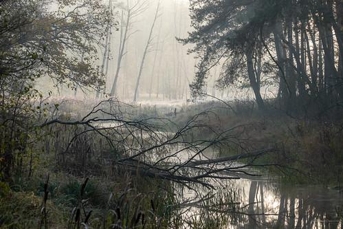 landscape nature poland mazovia river stream water flora trees morning
