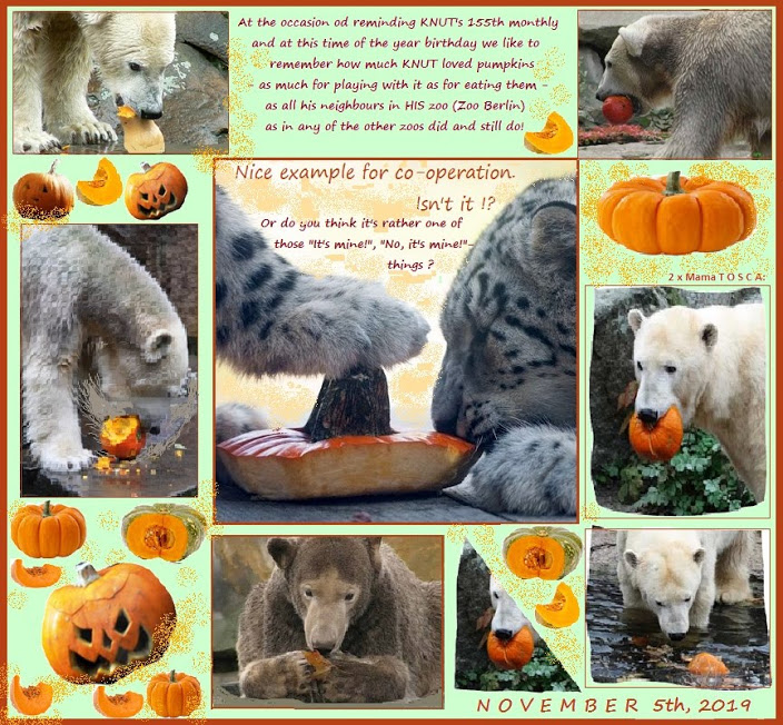 KNUT_155thMonthly_5November2019_COLLAGE_Fr_11h30_191101