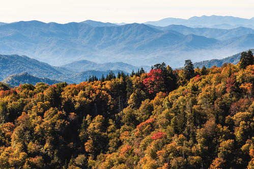 Autumn Pop (Smoky Mountains)