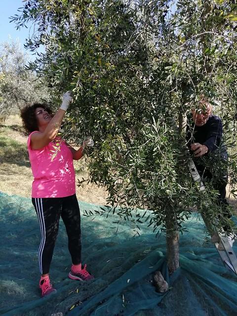 The olive harvest ended in Borghetto's family! ❌💪 . . . #like #follow #share #comment #subscribe #castelnuovodellabate #montalcino #borghettomontalcino #tuscany #tuscanygram #italy #italy #italia #santantimo #valdorcia #travel #travelblogger #tra