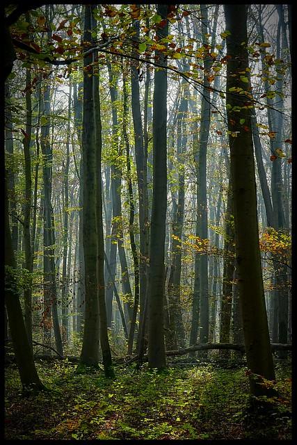 Mystik Forest