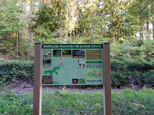 埼玉県狭山丘陵いきものふれあいの里・虫たちの森