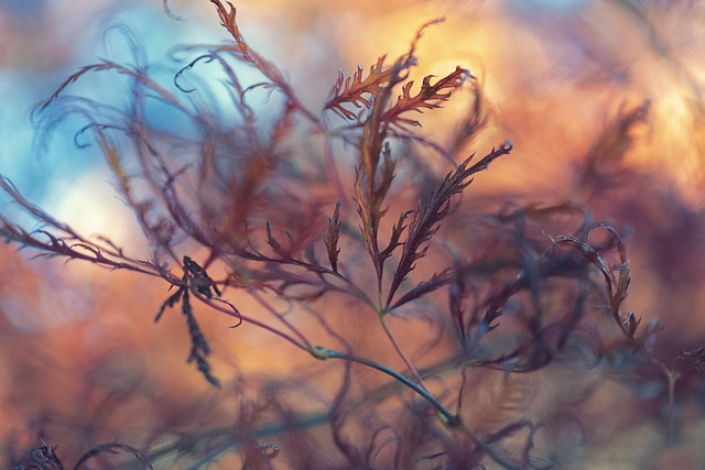 Nature's abstract