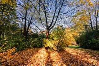 Autumn Leaves on Coleman's Field Jesmond Dene