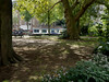A small urban park with sunlight and shadows of old plane trees, Amsterdam city