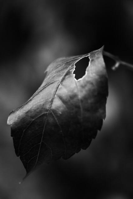 El dolor más intenso no es físico, es aquel que te roba la ilusión por la vida.