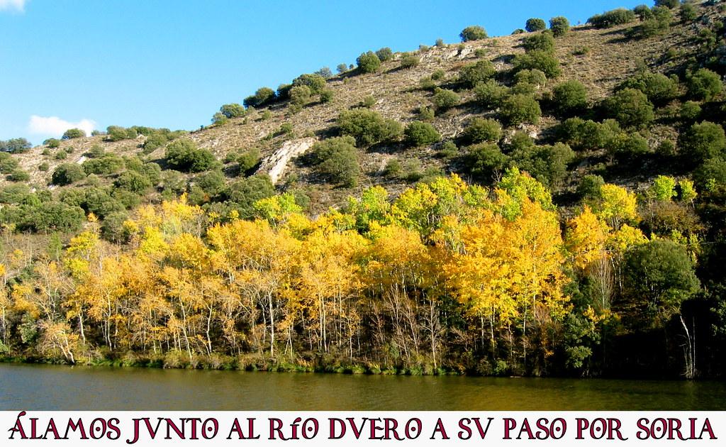 Álamos junto al río Duero a su paso por Soria