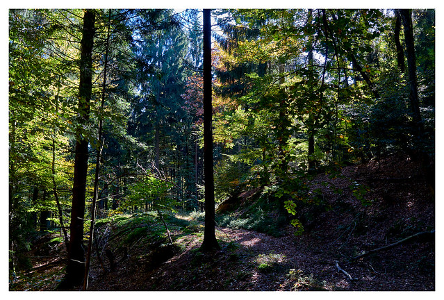 Herbst im Wald / Autumn in the forest