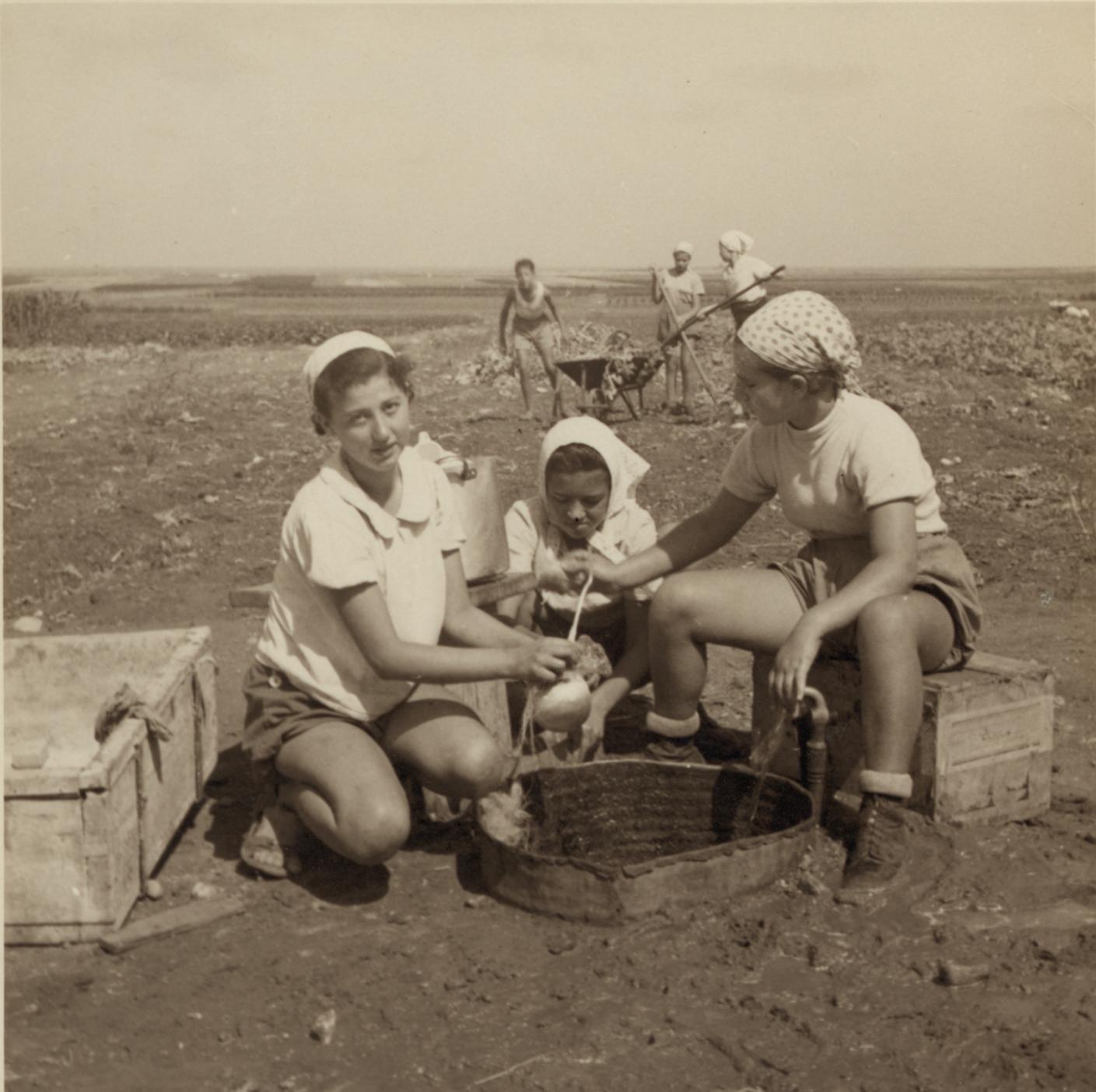 11. Работа в поле на равнине под Зихрон-Яаковом
