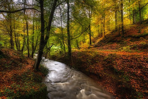 forest forestofdean autumn autumncolours fall fallcolors gloucestershire d7100 hdr 5xp
