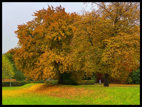 shades of autumn