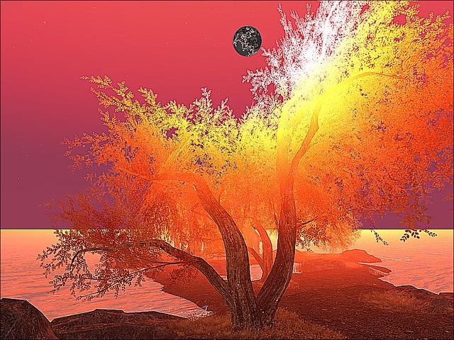 Authors Point - Oak Under An Autumn Moon