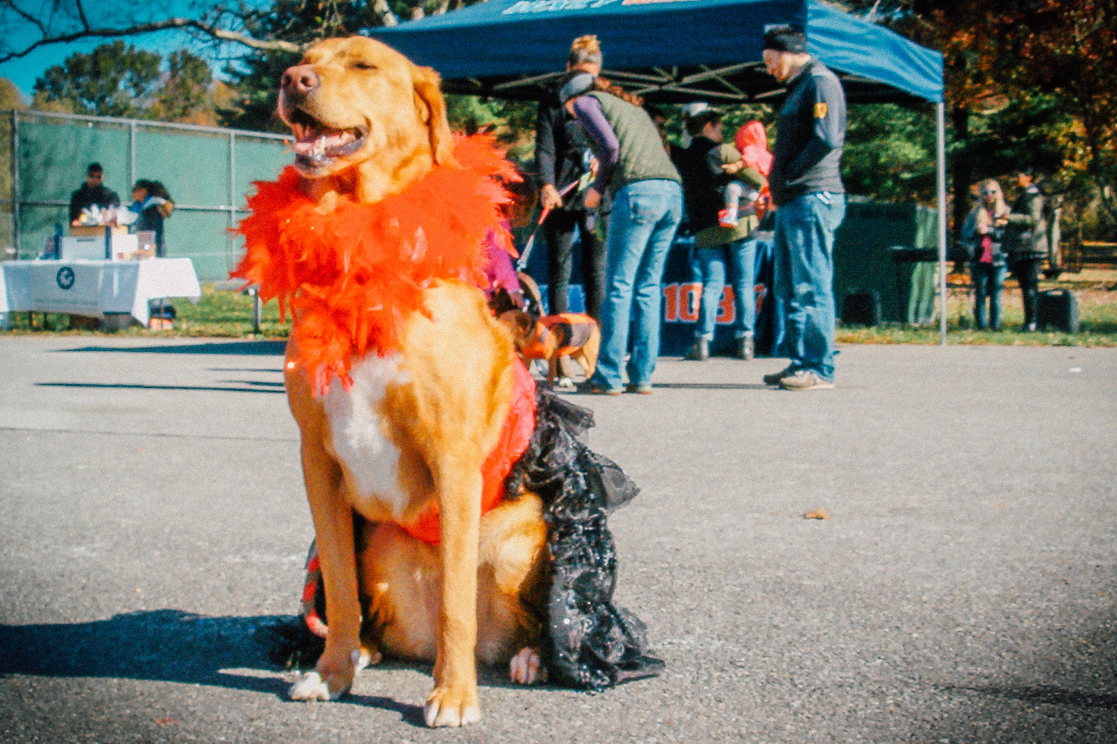 Pets and their owners have a 'howling' good time at NewBark PawLooza