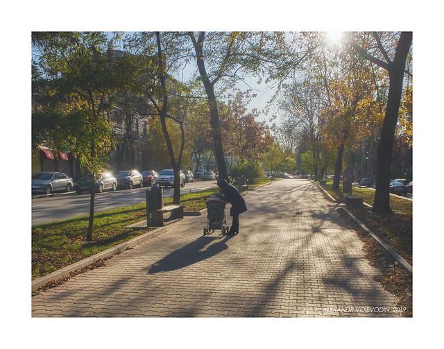 Sunny autumn day (II)