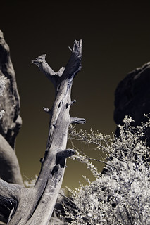 Red Rocks Park in infrared 24 | by furrycelt
