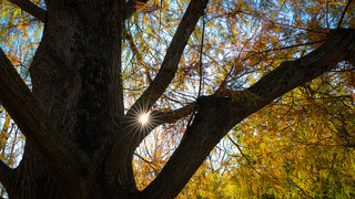 Autumn Sunstar | by John Brighenti