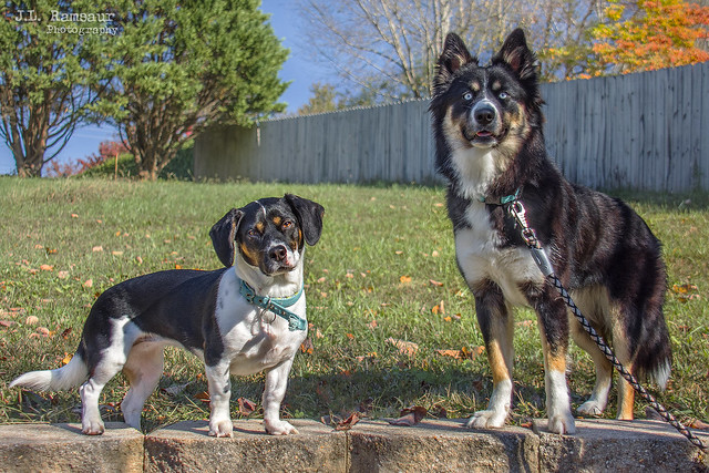 Hope and Kimber - Our Grandkids Have Paws
