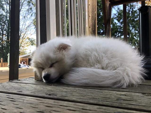 Take a outdoor nap