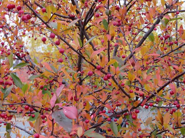 ** Coloris d'automne ** -19