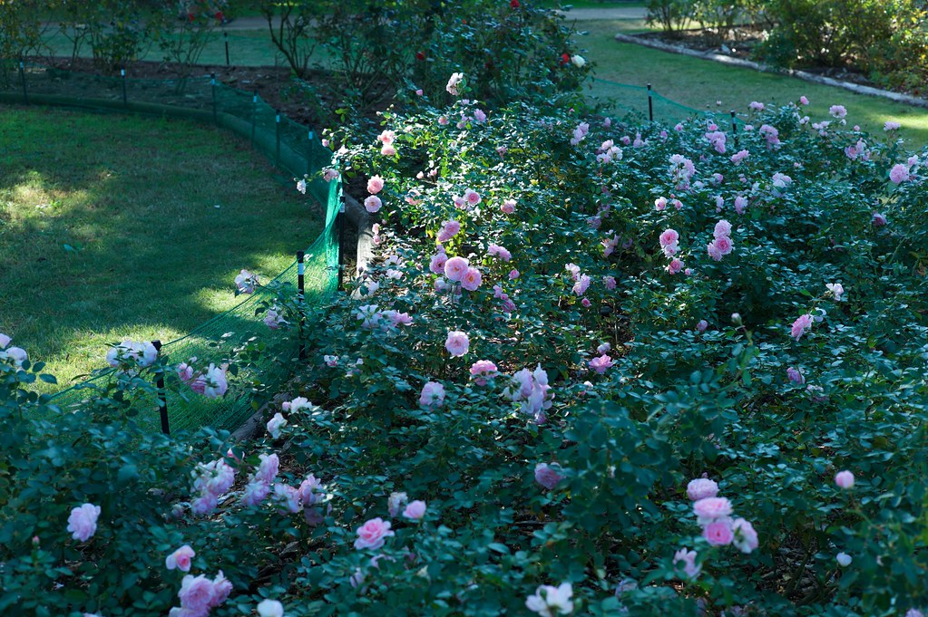 Hitachi Rose Garden