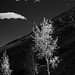 Red Rocks Park in infrared 20
