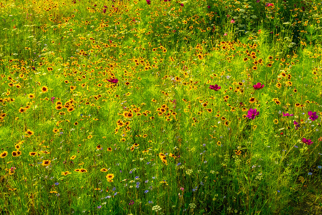Summer flowers of the meadow.