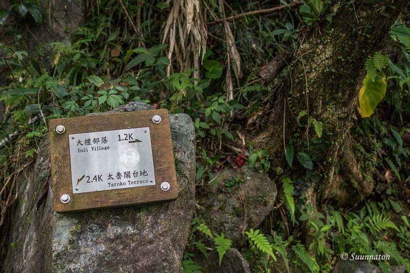 Taiwanilainen viidakkoseikkailu