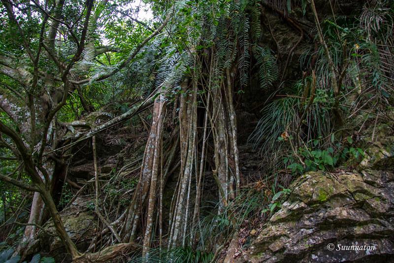 Taiwanilainen viidakko