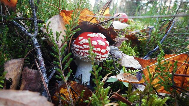 Colorful Autumn 28