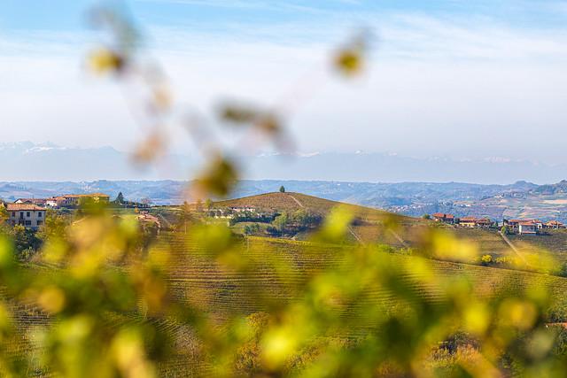 Delinat Weinreise Piemont 2019