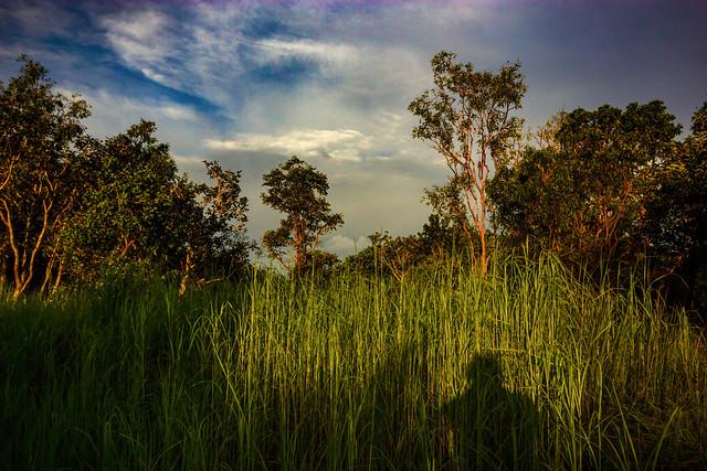 Bush @ Sunset