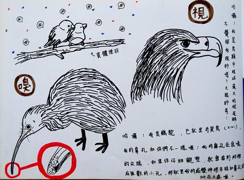 20190820-zozo畫鳥的感官3